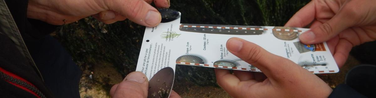 Agents du Parc naturel marin des estuaires picards et de la mer d'Opale travaillant sur le projet Life pêche à pied de loisir, en mission de comptage et de sensibilisation des pêcheurs à pieds sur le littoral.